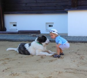 Pyrenean mastiff with chaild