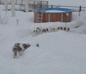 редкая в россии и популярная в европе порода собак