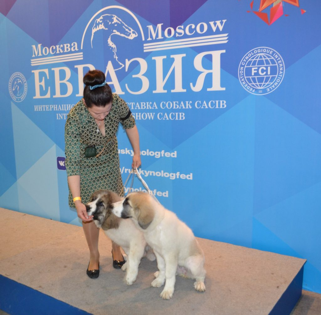 Eurasia-2018 International dog show