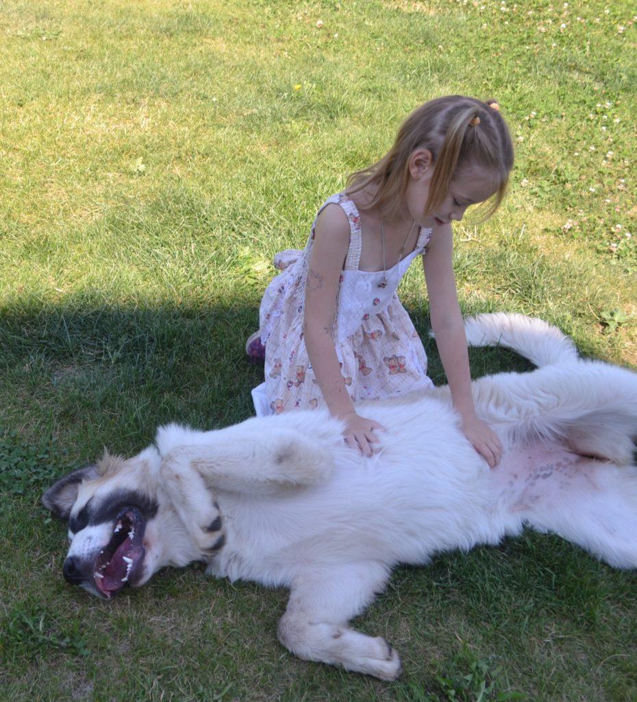 Пиренейский мастиф щенки с детьми