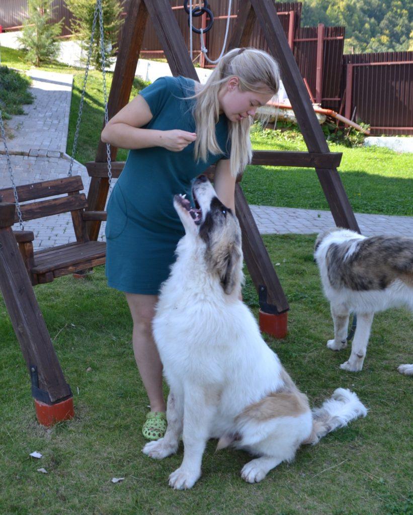 Пиренейский мастиф купить щенка в Москве