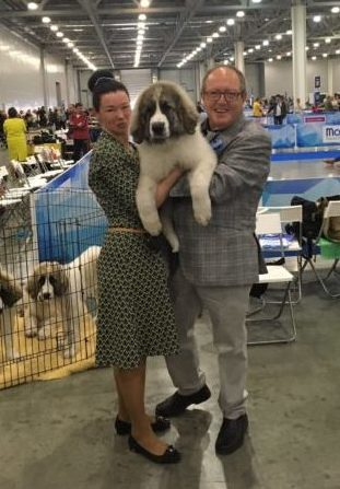 Our pyrenean mastiffs puppies with Rafael Malo Alcrudo