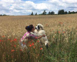 Мастиф пиренейский фотографии щенков из России
