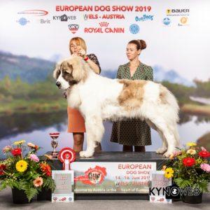 Победитель Euro Dog Show 2019