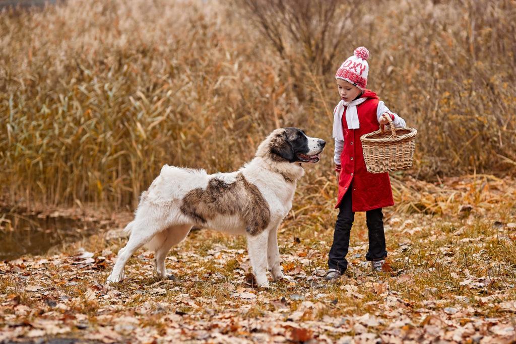 пиренейский мастиф собака для семьи с детьми